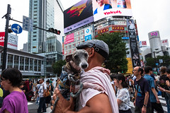 Doggy Day Out! (Victor Borst) Tags: street streetphotography streetlife reallife real realpeople asian asia asians faces face candid travel travelling trip traveling shibuyacrossing colorful colors fashion doggy dog dogs city cityscape citylife japan japanese tokyo urban urbanroots urbanjungle beautiful fuji fujifilm xpro2