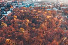 Autumn park | Kaunas aerial #293/365 (A. Aleksandravičius) Tags: ramybės parkas park kaunas aerial autumn 2019 lithuania europe drone lietuva city mavic2 mavic2pro l1d20c hasselblad dronas djieurope aerialphotography dji mavic pro djiglobal 2 djimavic2pro mavicpro2 birdseye 365days 3652019 365 project365 293365