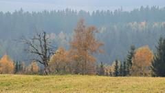 2019-10-19 Autumn (beranekp) Tags: germany deutschland erzgebirge schellerhau krušné hory autumn tree