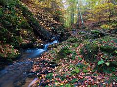 Herbst am Fluss (Naturportal) Tags: longexposure autumn nature forest river herbst natur panasonic fluss wald langzeitbelichtung herbstfarben dmcgx8 olympus m1240mm f28