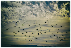 Bretagne - Le Tour Du Parc (marc.demeuleneire) Tags: selecteren sundown clouds birds france bretagne coast elitegalleryaoi bestcapturesaoi aoi