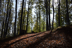 Autumn (DPozega) Tags: medvednica sljeme zagreb croatia forest trees autumn outdoor outside mountain colors wild europe view light landscape hiking shadow nature nikon d3300 leaves