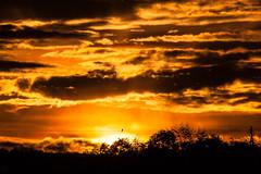 Sunset & Bird / @ 300 mm / 2019-10-21 (astrofreak81) Tags: explore clouds shadow schatten sunset sun wolken sonnenuntergang sonne sky himmel heaven light dawn orangesky orange dresden 20191021 astrofreak81 sylviomüller sylvio müller