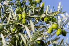Viaje con amigos a Malcocinado (loren_garcia_lopez) Tags: malcocinado olivares