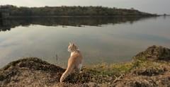 Un lindo gatito (su-sa-ni-ta) Tags: gato agua sed segundausina cordoba argentina lago octubre 2019 october cat lake water thirst reflejos