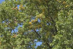 Squinting Into The Sun (Modkuse) Tags: trees naature nature natural natureart art artphotography artistic photoart fineartphotography fineart nopostprocessing sooc straightoutofcamera pronegstd fujifilmpronegstd fujifilm fujifilmxt2 fujinon xt2 xf1855mmf284rlmois fujinonxf1855mmf284rlmois