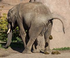 Zoo Magdeburg (Helmut44) Tags: deutschland germany sachsenanhalt magdeburg magdeburgerzoo zoo elefant tierwelt animal tier