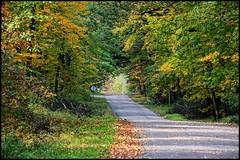 Beckoning (newfrontier08) Tags: nikon d7100 nikkor autumn wi wisconsin fall colors seasons changing nasture