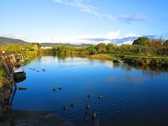Los patos en el Bidasoa (eitb.eus) Tags: eitbcom 16599 g1 tiemponaturaleza tiempon2019 gipuzkoa irun josemariavega