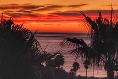 Fuengirola Sunrise (Andreadm66) Tags: sea sky clouds sunrise spain palmtree costadelsol fuengirola vibrant orange colourful