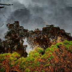 Photo of #cloudy #day #reflections #autumn #trees #water #loch #Scotland #dramatic