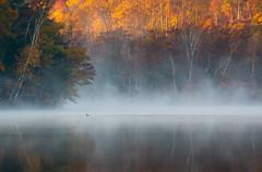 Serenity (Mark Polson) Tags: loon fallcolor lake mist fog sarona wi reflections