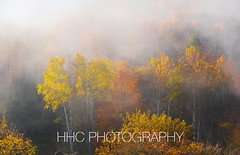 Foggy Autumn Morning (HelenC2008) Tags: fall autumn foliage fog allegany alleganystatepark letchworth nikon d850 hhcphotography