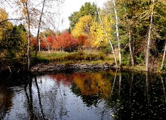 Arrival of Fall (EcoSnake) Tags: fall october leaves colors autumn idahofishandgame naturecenter