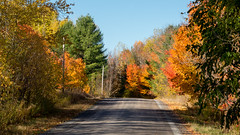 Canadian rural street during the Indian summer (Classicpixel (Eric Galton) Photography Portfolio) Tags: rural dirtroad road dirt autumn automne ericgalton classicpixel colors colours canada ottawa ontario red rouge green vert orange trees arbres feuilles leaf leaves maple indiansummer étéindien olympus em5markii ciel sky bleu blue