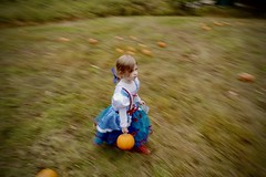 Julienne Picking Pumpkins (NestorDesigns) Tags: nestordesigns children child halloween leicaq nestorriverajr kids pumpkin running cute adorable