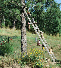 boots n ladder (tarkushoo) Tags: film ektachrome 100 135 country tree pine cowboy boots ladder crafts trees mountains