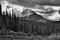 Bow Peak Beyond a Forest of Evergreen Trees (Black & White) (thor_mark ) Tags: nikond800e day4 triptoalbertaandbritishcolumbia icefieldsparkway banffnationalpark overcast lookingse bowpeak lowclouds capturenx2edited colorefexpro outside nature landscape mostlycloudy rockymountains canadianrockies mountains mountainsindistance mountainsoffindistance trees evergreens hillsideoftrees vicinitysimpsonsnumtijahlodge snowcapped travelingicefieldsparkway travelingtheicefieldsparkway centralmainranges waputikmountains waptaicefield blackwhite silverefexpro2 project365 alberta canada