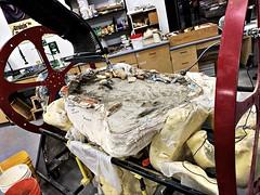 "the pelvis (aka ""the kiddie pool"") (Chris Blakeley) Tags: seattle hipstamatic burkemuseum fossil trex tyrannosaurusrex dinosaur paleontology"