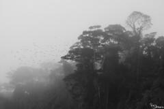Rainforest (Kusi Seminario) Tags: bw blancoynegro blackandwhite rainforest selva jungle amazon amazonia peru southamerica madrededios nature outdoors