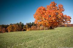 new secret spot (Brian M Hale) Tags: tree outside outdoors west boylston ma mass massachusetts newengland usa w brian hale brianhalephoto autumn foliage fall