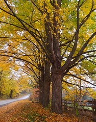 Autumn Country Road (scilit) Tags: trees autumn forest fence field road countryroad dirtroad green yellow orange fallenleaves leaves grass branches trunks landscape scenery nature tistheseason
