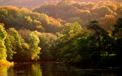 Autumn in the Wye Valley (M.T.A.V) Tags: autumn trees water river evening colours eveninglight forest woodland countryside riverside calm forestofdean wyevalley