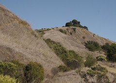 The other side (Steve Wedgwood) Tags: sibleyvolcanicregionalpreserve sibley sibleypark ebrpd ebayparksok oakland hill bushes trees grass uphill afternoon