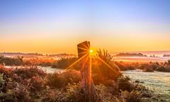 Season Of Mists (nicklucas2) Tags: landscape newforest nature andrewsmare sunrise mist sun sunburst