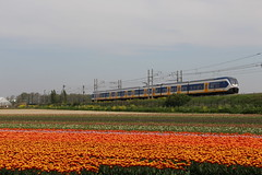 2019-04-23; 0010. SLT-6-2649 als trein 3345. Klinkenberg, Sassenheim. (Martin Geldermans; treinen, Züge, trains, vliegtu) Tags: nederlandsespoorwegen trein train treinstel treinen electrictrains electricmultipleunit elektrischtreinstel spoorwegen züge zug bollenvelden voorhout transport alltypesoftransport