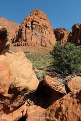 Great Basin Rattlesnake in situ (Brian Eagar Nature Photography) Tags: herp reptile animal nature wild wildlife utahherps utahnature utahwildlife utahsnake utahreptile snake rattlesnake greatbasinrattlesnake crotalus crotalusoreganus crotalusoreganuslutosus