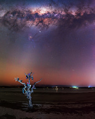 Milky Way and the Tree of Soles - Herron, Western Australia (inefekt69) Tags: herron point collins pool mandurah water panorama stitched mosaic msice milky way cosmology southern hemisphere cosmos western australia dslr long exposure rural night photography nikon stars astronomy space galaxy astrophotography outdoor core great rift ancient sky 50mm d5500 landscape tree silhouette tracked ioptron skytracker hoya red intensifier dead shoes soles