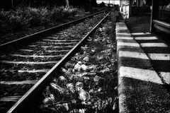 C'est pas gagné!! /  It will not be easy!! (vedebe) Tags: noiretblanc netb nb bw monochrome trains rails ecologie bouteilles bottles ombres lumières perspective paysages environnement