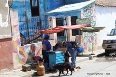 Square umbrellas over the street food stall - Sunday Market Tarabuco Chuquisaca Bolivia (WanderingPJB) Tags: flickruploaded umbrella southamerica latinamerica bolivia tarabuco sundaymarket bazaar chuquisaca square streetfood stall