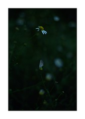 This work is 9/12 works taken on 2019/9/16 (shin ikegami) Tags: sony ilce7m2 a7ii sonycamera 50mm lomography lomoartlens newjupiter3 tokyo 単焦点 iso800 ndfilter light shadow 自然 nature naturephotography 玉ボケ bokeh depthoffield art artphotography japan earth asia portrait portraitphotography