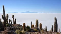 Cactus Island (Chemose) Tags: sony ilce7m2 alpha7ii mai may bolivie bolivia uyuni paysage landscape désert salar sel salt cactus montagne mountain incahuasi