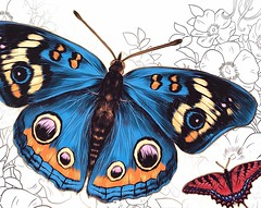 Butterflies, Not Coloured (l plater) Tags: butterflygarden book56 harmonyofcolour coles westfield hornsby sydney