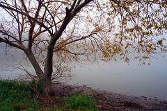 Fall scene (Dumby) Tags: landscape ilfov românia brănești autumn fall colors nature outdoor lake fog
