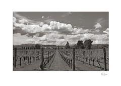 Wine Country #5 (radspix) Tags: kodak medalist ektar 100mm f35 tmax 400 pmk pyro
