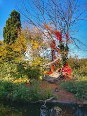 Autumn in the Zoo (Mike Bonitz) Tags: deutschland autumn plants germany zoo herbst pflanzen tierpark hallesaale saxonyanhalt sachsenanhalt bergzoo instagram huaweip20 duck ape ente affe monkey animals tiere