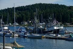 Fishing Boats, Gig Harbor (fernside) Tags: gigharbor washington fishingvillage fishingboats