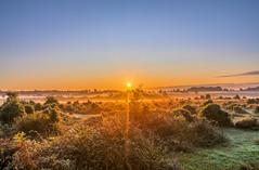 New Forest Sunrise (nicklucas2) Tags: landscape newforest nature andrewsmare sunrise mist sun sunburst
