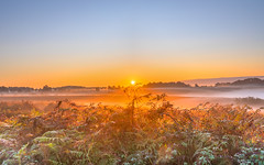 Autumn Glow (nicklucas2) Tags: landscape newforest nature andrewsmare sunrise mist sun sunburst
