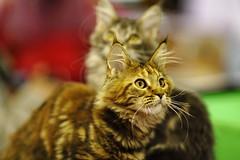 kittens (Сonstantine) Tags: catslife kitten animals nice kittens