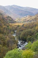 Autumn Colour (digiphill) Tags: 2019 argyll autumn autumncolour glennevis mountainash october rowan rowanberries scotland upperglennevis westernscotland