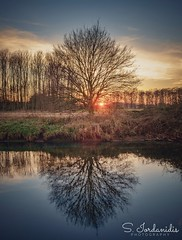 Sunset Reflections (Stathis Iordanidis) Tags: riverniers wachtendonk riverside tress reflections mirroring sunset sundown amazinglandscape serenity silence tranquility travelling