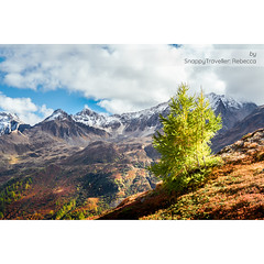 Loving all the wonderful autumn colours. This one is from last year in the Val Bedretto, Switzerland