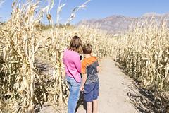 Lost in a Corn Maze (aaronrhawkins) Tags: corn maze lost navigate decide boy mom autumn festival harvest stalk path pleasantgrove utah october fall fun family chld mother navigation map aaronhawkins kellie joshua