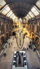 This place is always over whale-ming...!! Open image for full view :) (spideysenses77) Tags: city england panorama london museum europe britain pano capital whale naturalhistorymuseum bluewhale ldn nerd architecture geek gorgeous science biology love skeleton amazing darwin bones huge evolution rays sunset where'sdippy phoneshot iphone iphoneography iphoneonly kensington