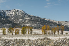 A taste of winter (ChicagoBob46) Tags: lamarvalley landscape fall yellowstone yellowstonenationalpark nature naturethroughthelens coth ngc coth5 npc
